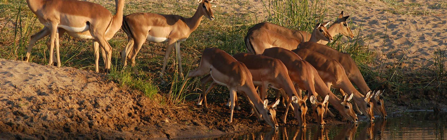 mopane_safari_slider2