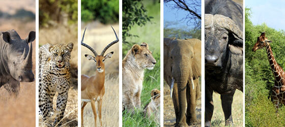 Adopt an animal on Mapesu Private Game Reserve!