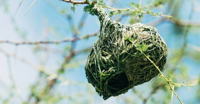 Beautiful Weaver Nests on all the trees at the moment.