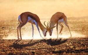 Safari Lodge in South Africa   Safari in Limpopo   Mopane Bush Lodge