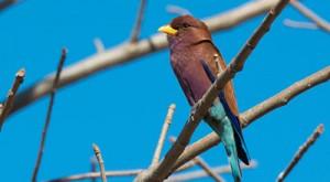 Birding in Limpopo | Safari Lodge in South Africa | Safari in Limpopo | Mopane Bush Lodge