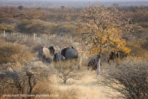 Safari Lodge in South Africa | Safari in Limpopo | Mopane Bush Lodge