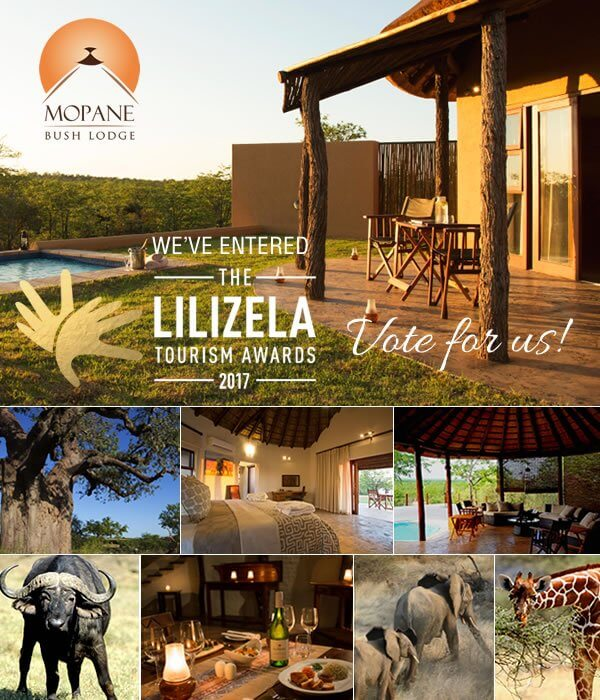 vote_lilizela_2017_mopane-bush_lodge_1