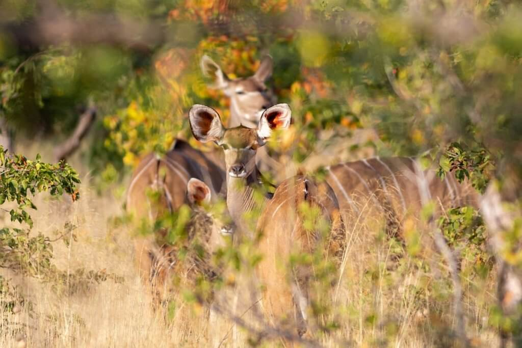 animals in south africa | Mopane Bush Lodge