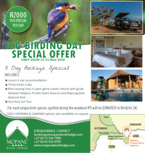 Safari Lodge in South Africa | Safari in Limpopo | Mopane Bush Lodge | Game Lodges in south africa