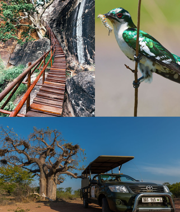 mopane_bush_lodge_activities