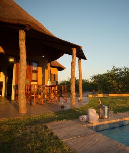 animals in south africa   mopane bush lodge