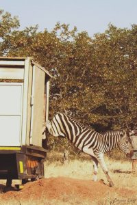 volunteer projects in south africa